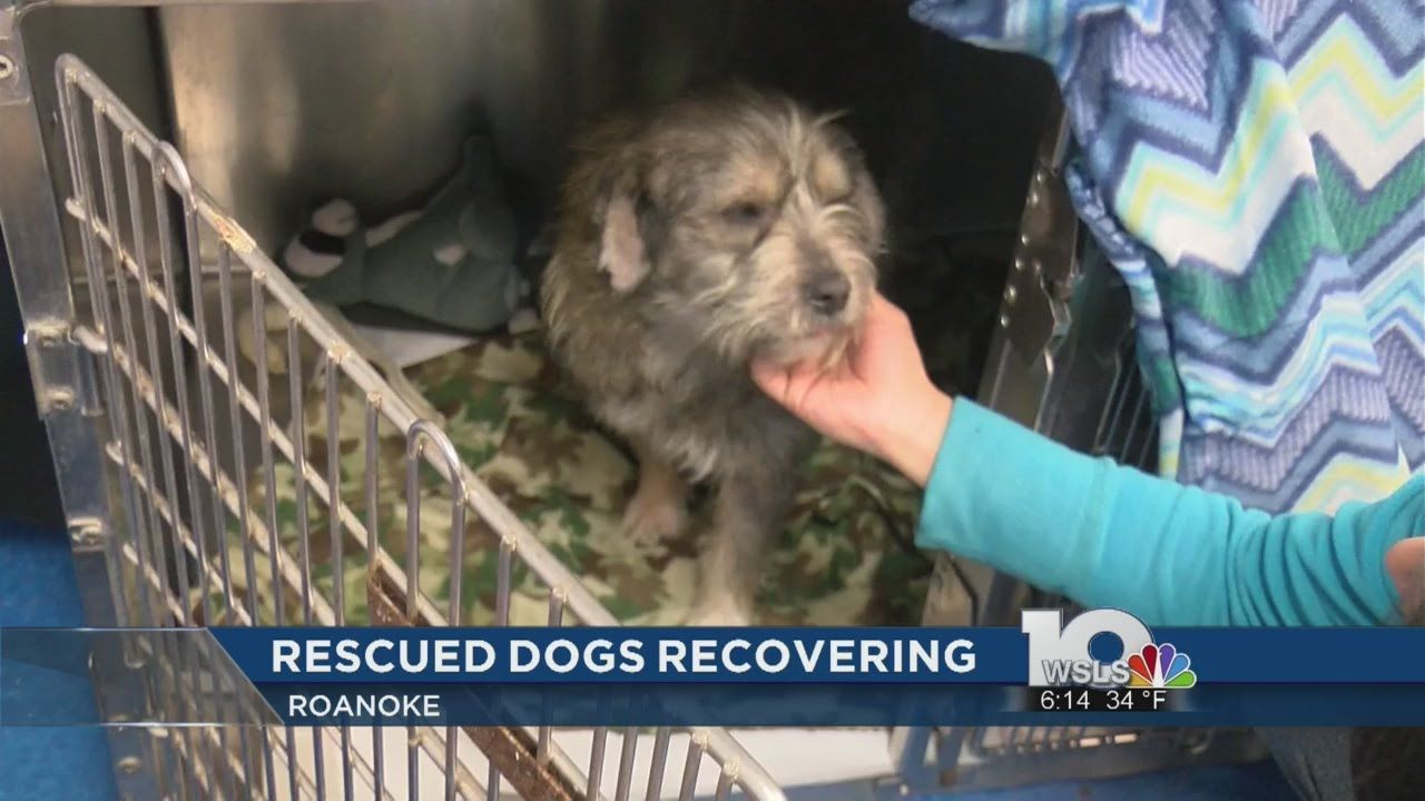 Pin by Angels of Assisi on AOA in the News Dogs, Rescue