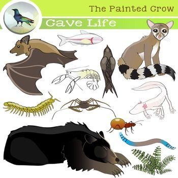Cave Life Clip Art Subterranean Creatures Biology Science Clip Art Cave Animals Archaeology For Kids