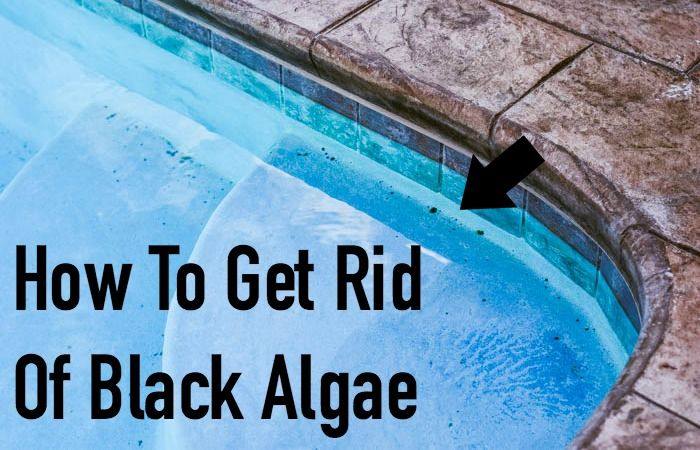How To Get Rid Of Black Algae In Your Pool Totally The Bomb Black Algae In Pool Pool Swimming Pool Maintenance