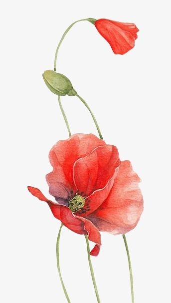 Poppy Chinese Style Watercolor Flower Png Image Watercolor Poppies Poppy Painting Flower Art