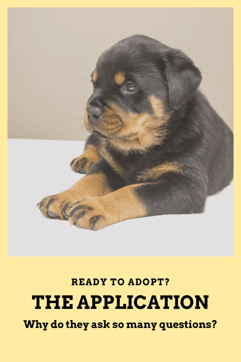 Adoption Applications Why Are There So Many Questions Ensuring Their Cats And Dogs Will End Up In Loving Caring Homes Is A Shelter S Main Priority The Ado Dog Adoption