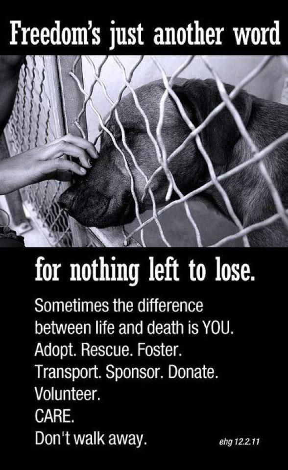 Animal Rescue Quotes And Sayings Wwwpicswecom