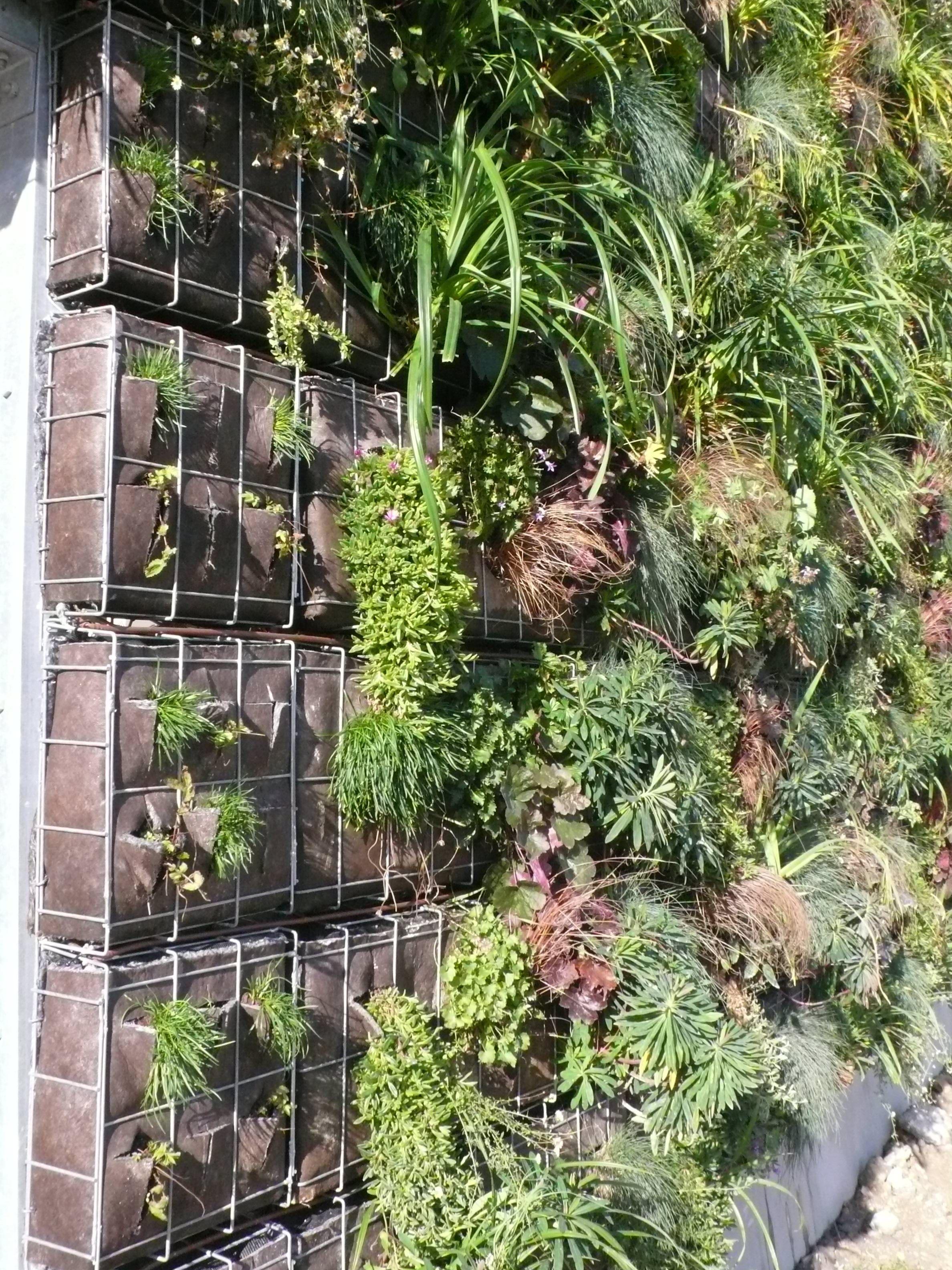 green wall google search garden design pinterest