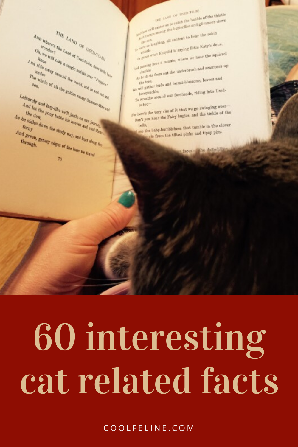 60 Interesting Cat Related Facts In 2020 Cat Facts Cats Cat Love Quotes