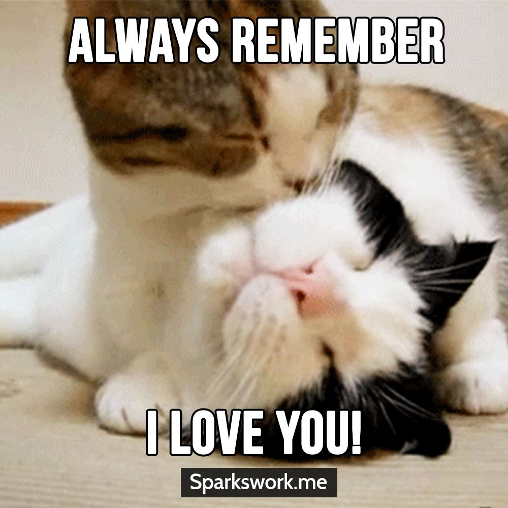 Yes Meow I Love You Too Cute Animal Quotes Funny Cat Memes Love Memes Funny