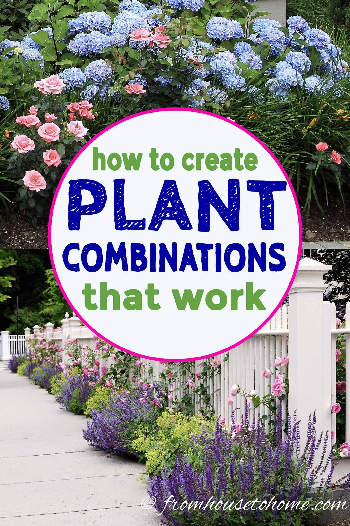 Plant Combinations 10 Tips For Creating Flower Combinations That Work Gardening From House To Home Plants Plant Combinations Beautiful Gardens