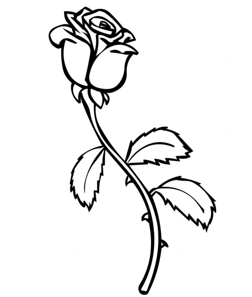 Printable Roses To Color Bing Images Flower Coloring Pages