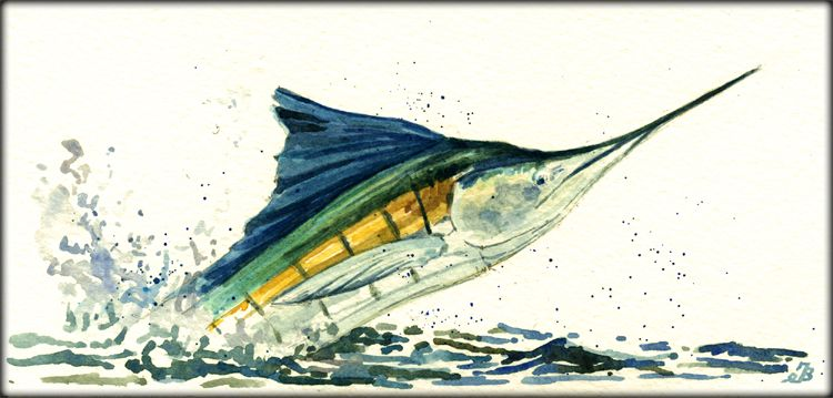 Sailfish Watercolor By Juan Bosco Fish Painting