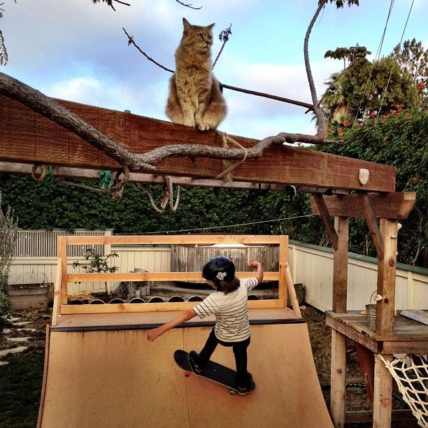 Backyard Mini Ramp For The Kids... And The Cat
