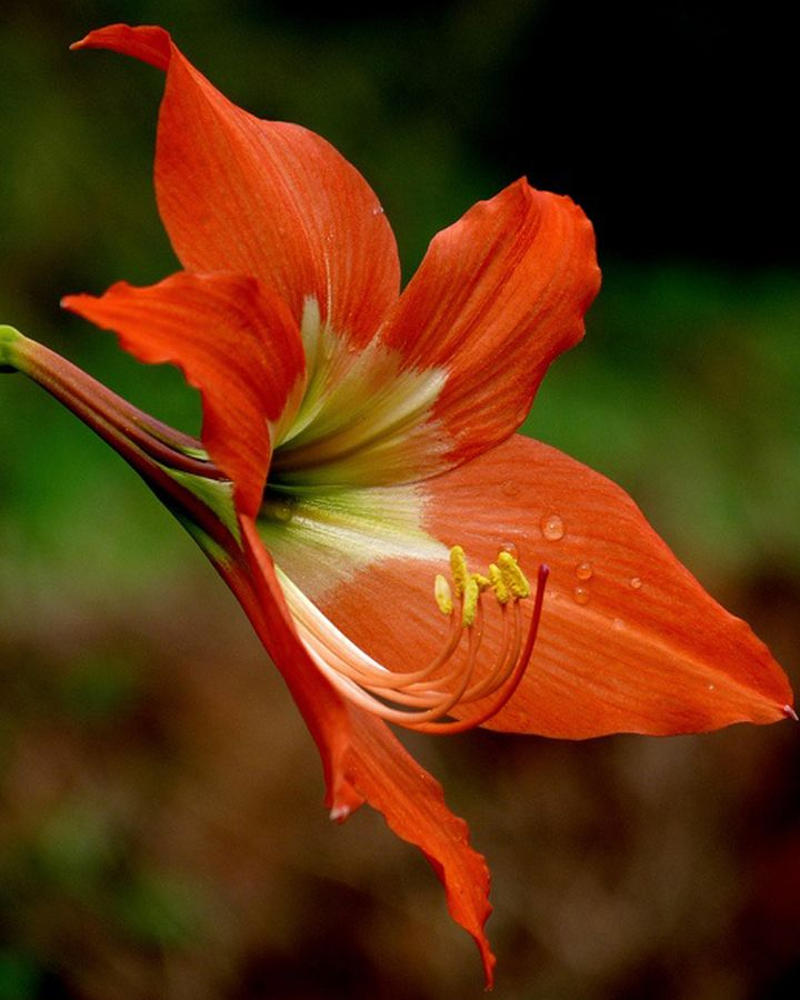 We Have Selected 10 Of The Most Exotic Flowers Growing In Caribbean Soils Bring Into Your Home