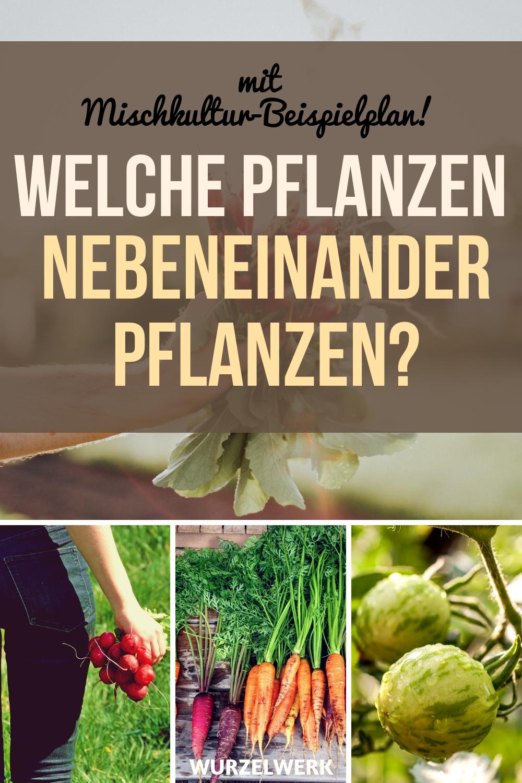 28 Gemüsearten und ihre wirksamsten Mischkultur-Partner + Beispielplan - Wurzelwerk #gemüsepflanzen