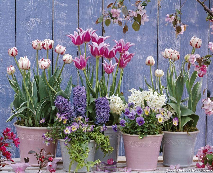 bulbes de printemps en pot 5 id es d 39 association jardinage bulbes de printemps jardins. Black Bedroom Furniture Sets. Home Design Ideas