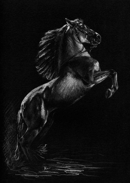 Rysunek białą kredką na czarnym tle, przedstawiający siowego konia w lewadzie