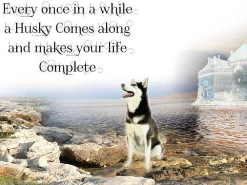 Husky Frases: Harley Stuff