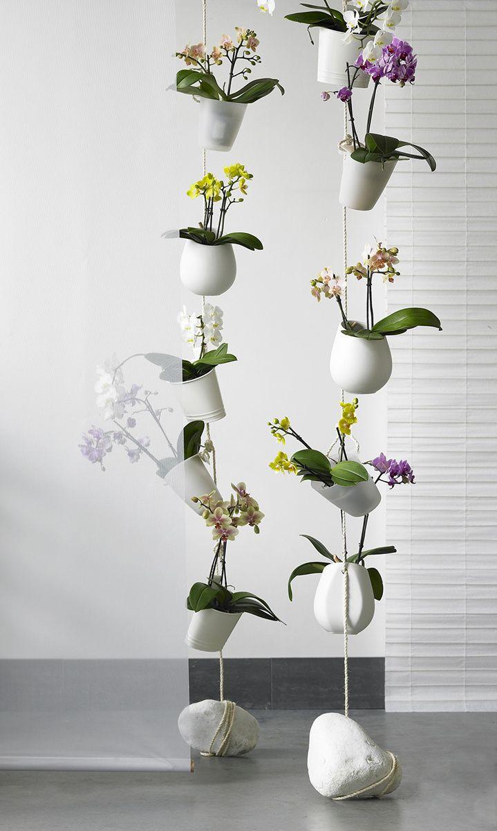 las 10 plantas de interior que sobrevivir n orchideen. Black Bedroom Furniture Sets. Home Design Ideas