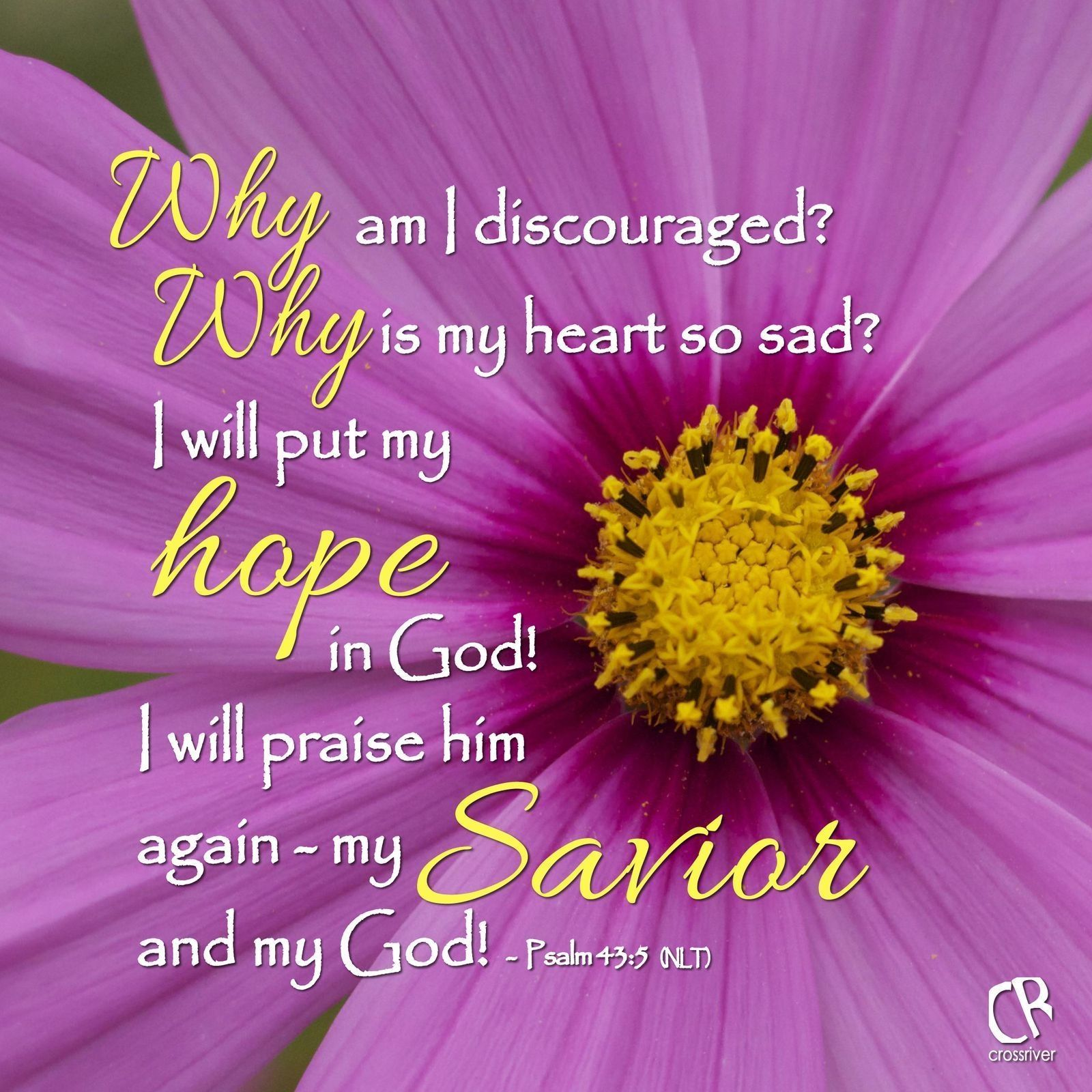 Psalms Bible Savior: Why Am I Discouraged? Why Is My Heart So Sad? I Will Put