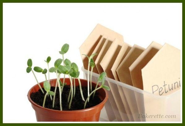 Veggie-Planting-Guide(570x380)-frame