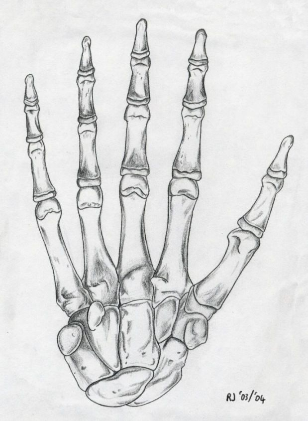 Skeleton hand drawing. | Drawing | Pinterest | Hand drawn, Skeletons ...