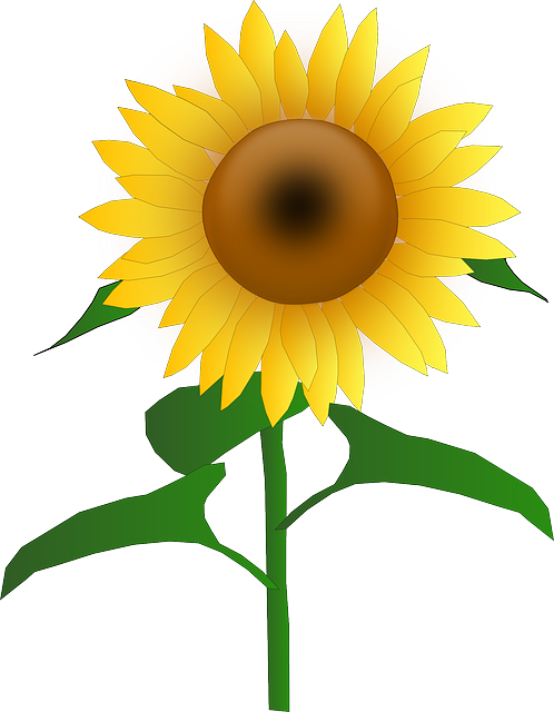 free image on pixabay sunflower blooms blossom golden clip rh pinterest com sunflowers cartoon games sunflower cartoon tumblr