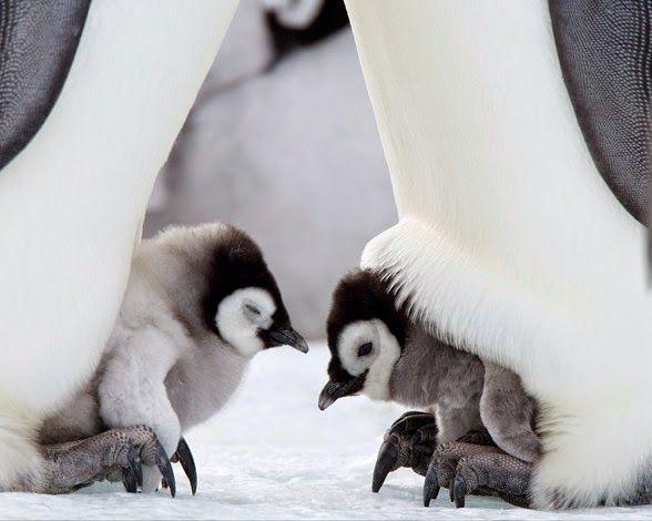 Un Mundo en Paz: Gestos de animales muy humanos