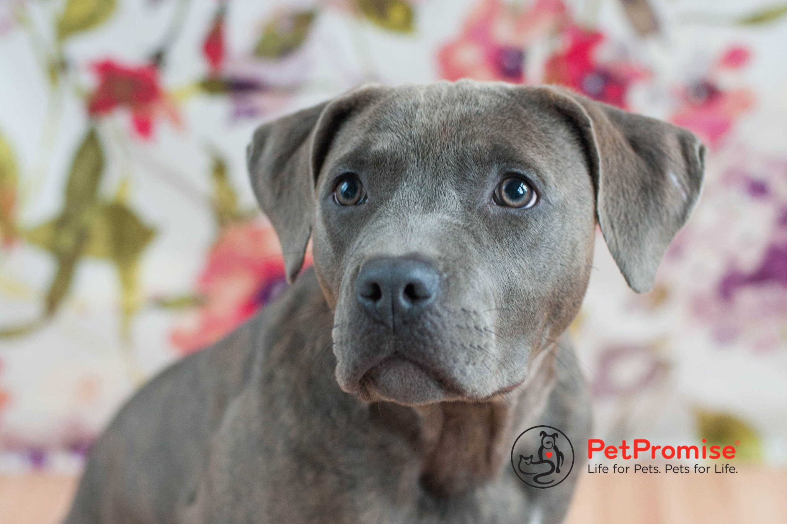 KT Columbus Ohio Rescue Dog American