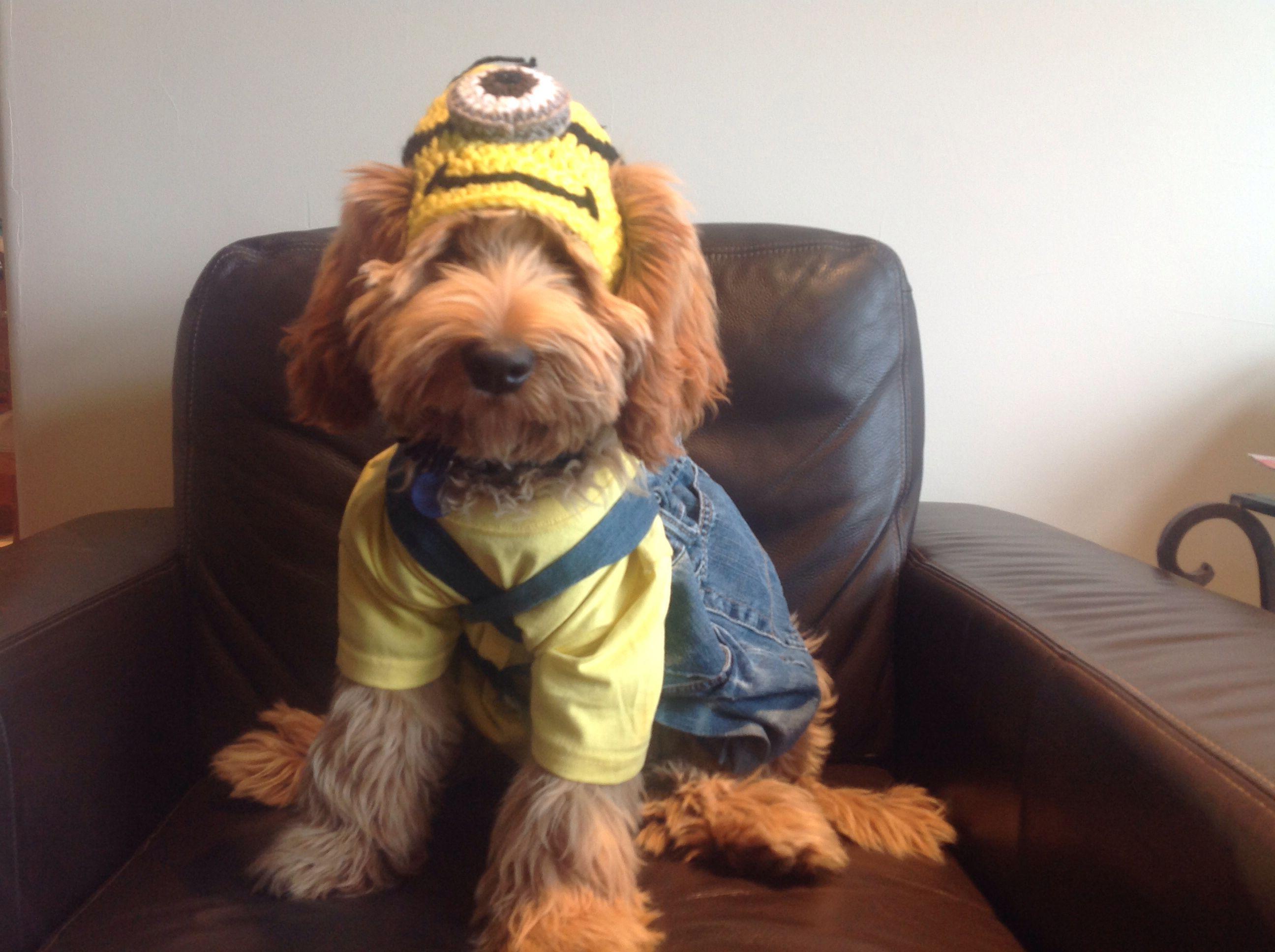 Labradoodle Minion Halloween Costume Minion Dog Costume Minion