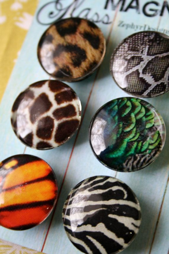 Glass Magnets  Patterns in Nature by ZephyrDesignsAlaska on Etsy, $8.00
