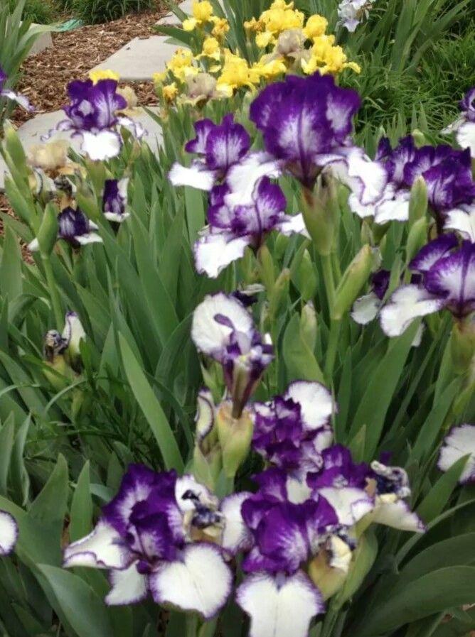 Simple beautiful flowers