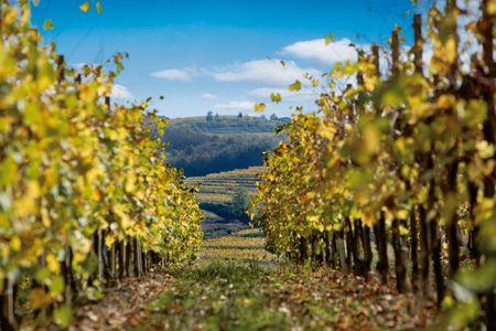 Fantinel Winery Vinyards