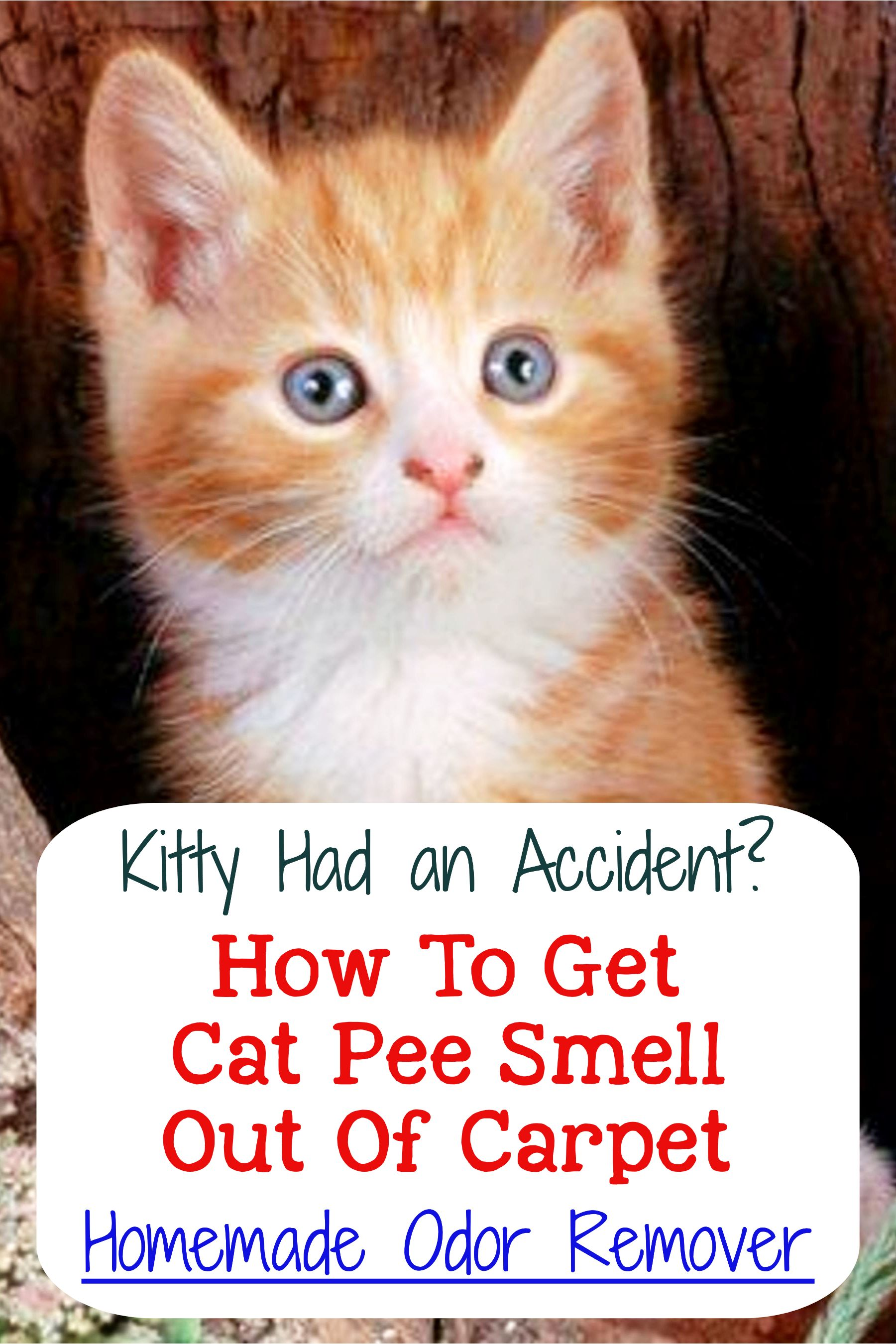 Cat urine stink how to get rid of cat pee smell