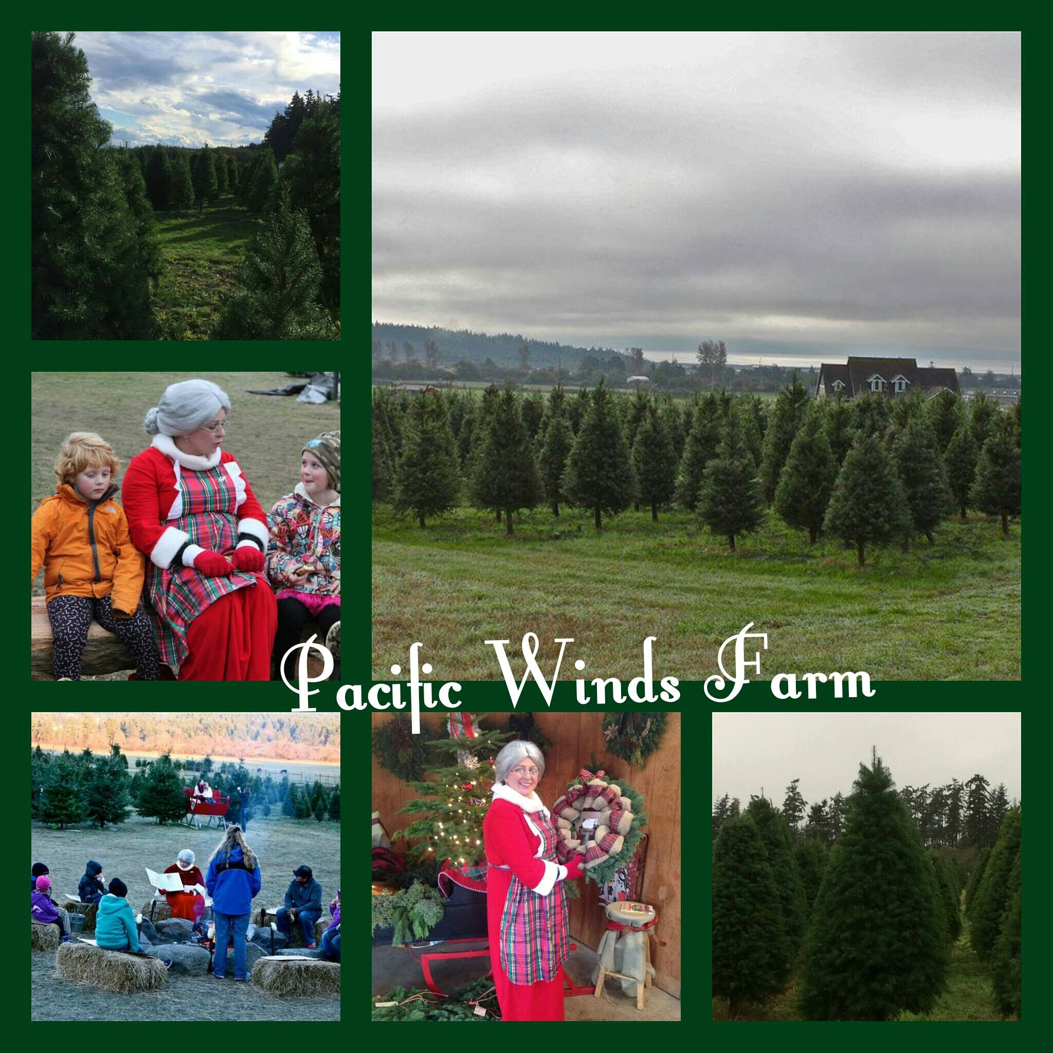 "Christmas Tree Farm Southern California: ""The Christmas Tree Farm In Oak Harbor On Torpedo Road"