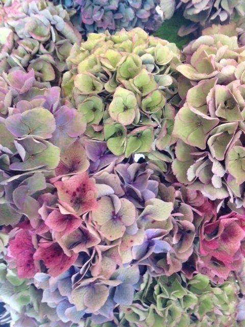 Super Mooie Hortensias Garden Pinterest Hortensias Hydrangea - Color-hortensia