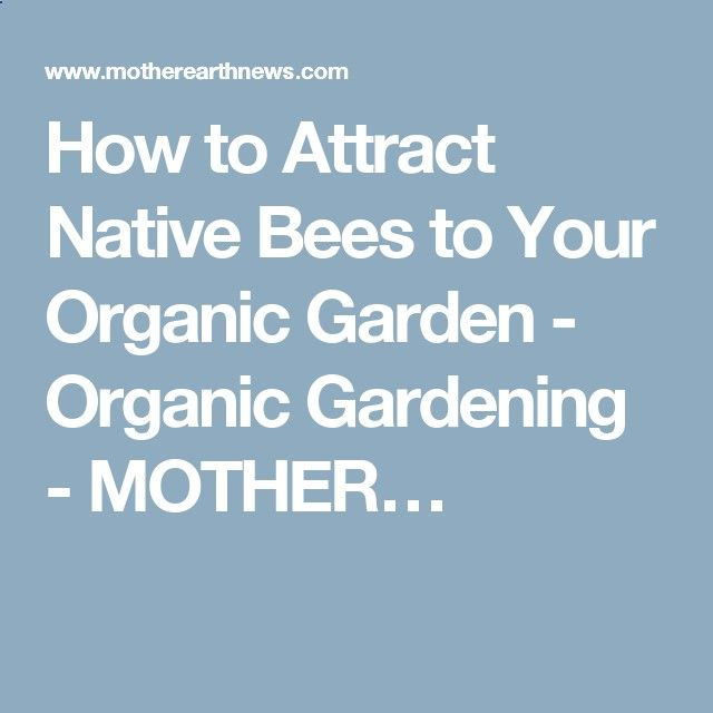 How to Attract Native Bees to Your Organic Garden - Organic Gardening - MOTHER…