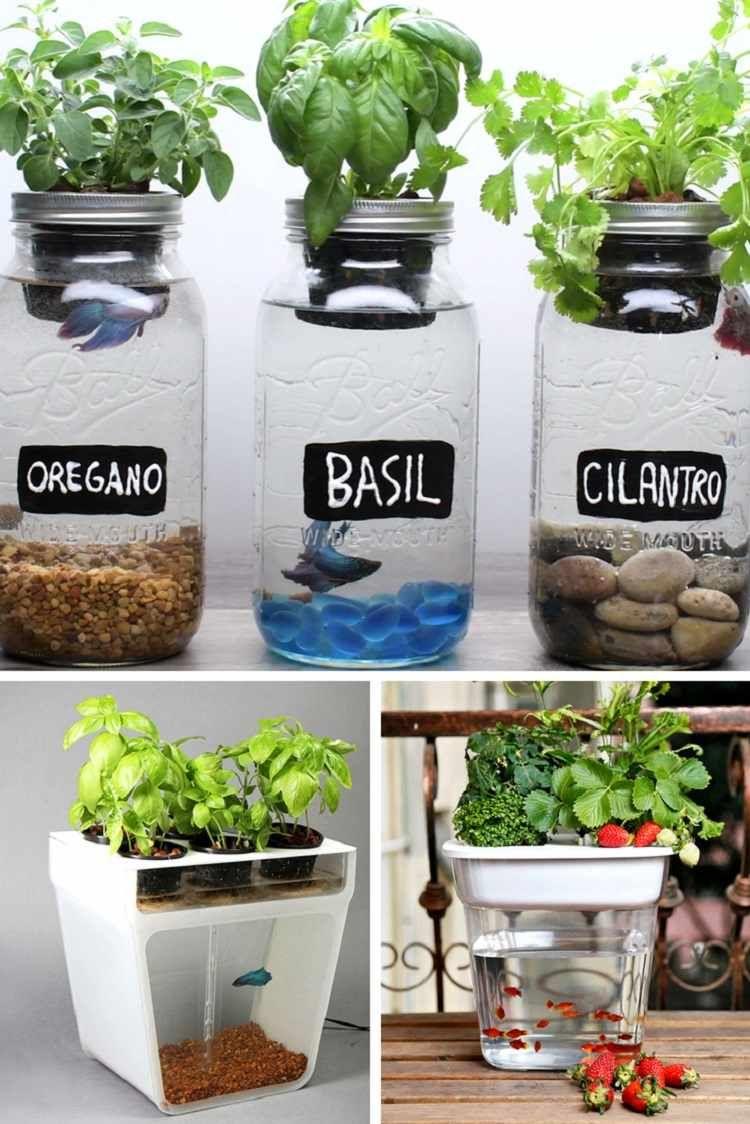 Faire Un Bassin Exterieur système aquaponique - tout savoir sur ce mode de culture