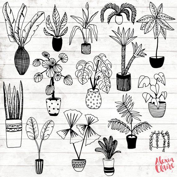 House Plant Clipart - Hand Drawn Plants Clipart - Potted Plant Art - Plant Digital Paper - Plants Clip Art - Plant Illustration - ACGABW06 -   11 plants Art sketch ideas