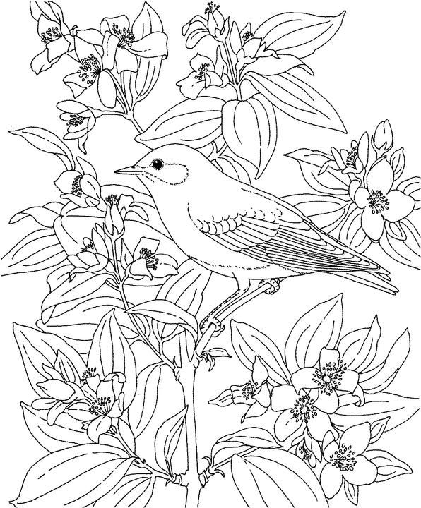 Idaho Mountain Bluebird Coloring Page Bird Coloring Pages Flower Coloring Pages Animal Coloring Pages