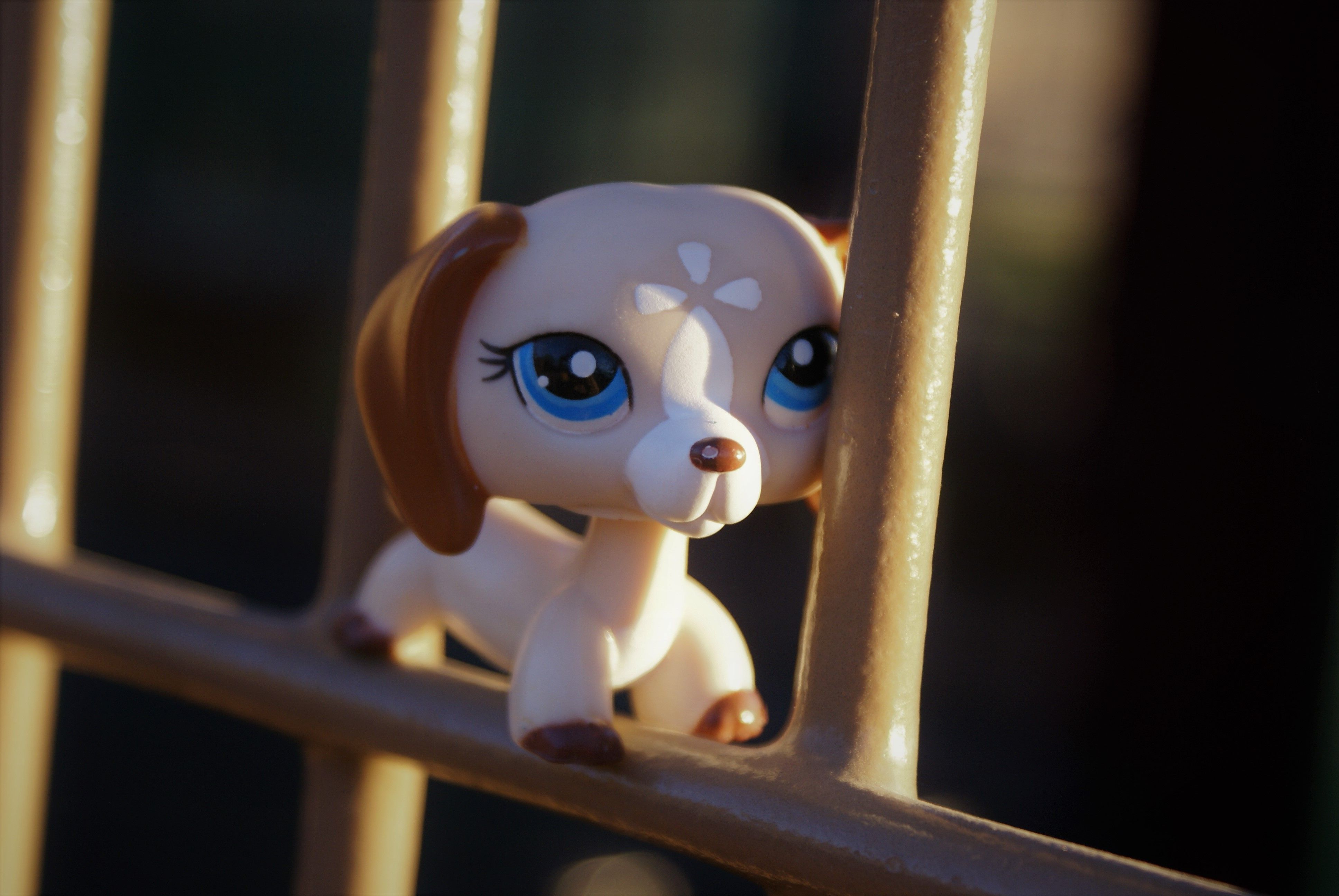 Lps Dachshund Lps Dog Lps Pets Lps Drawings