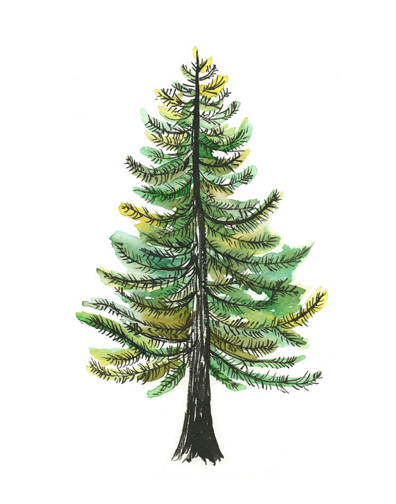 Watercolor Evergreen Tree Art Print Painting Tree Nature