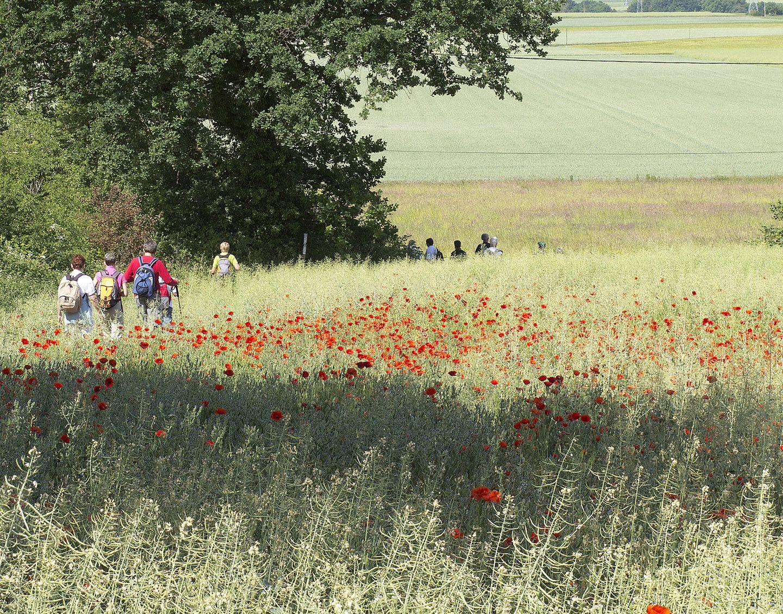 Randonneurs traversant un champs de coquelicot © J.Couturier
