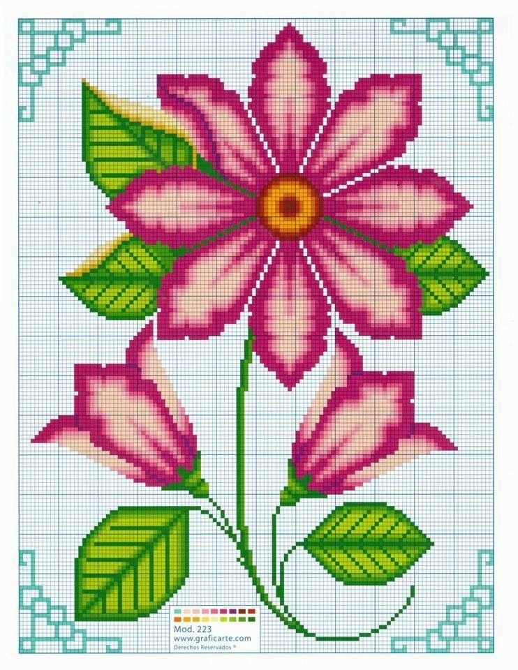 Gänseblümchen Nunez