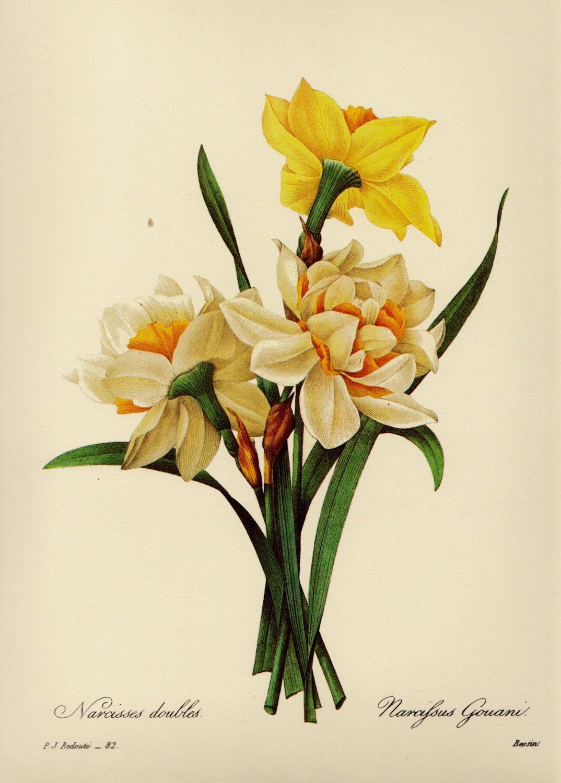 Lovely Botanical Flower Print Yellow Flower Art Cottage Decor ...