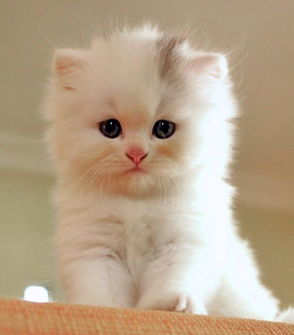 Can\u0027t imagine anything cuter than this little furball