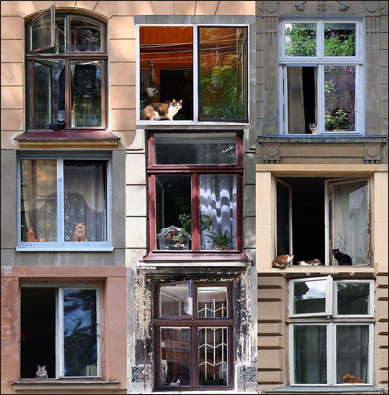 """Cat's house (windows:)"" by Alla Lora, via 500px."