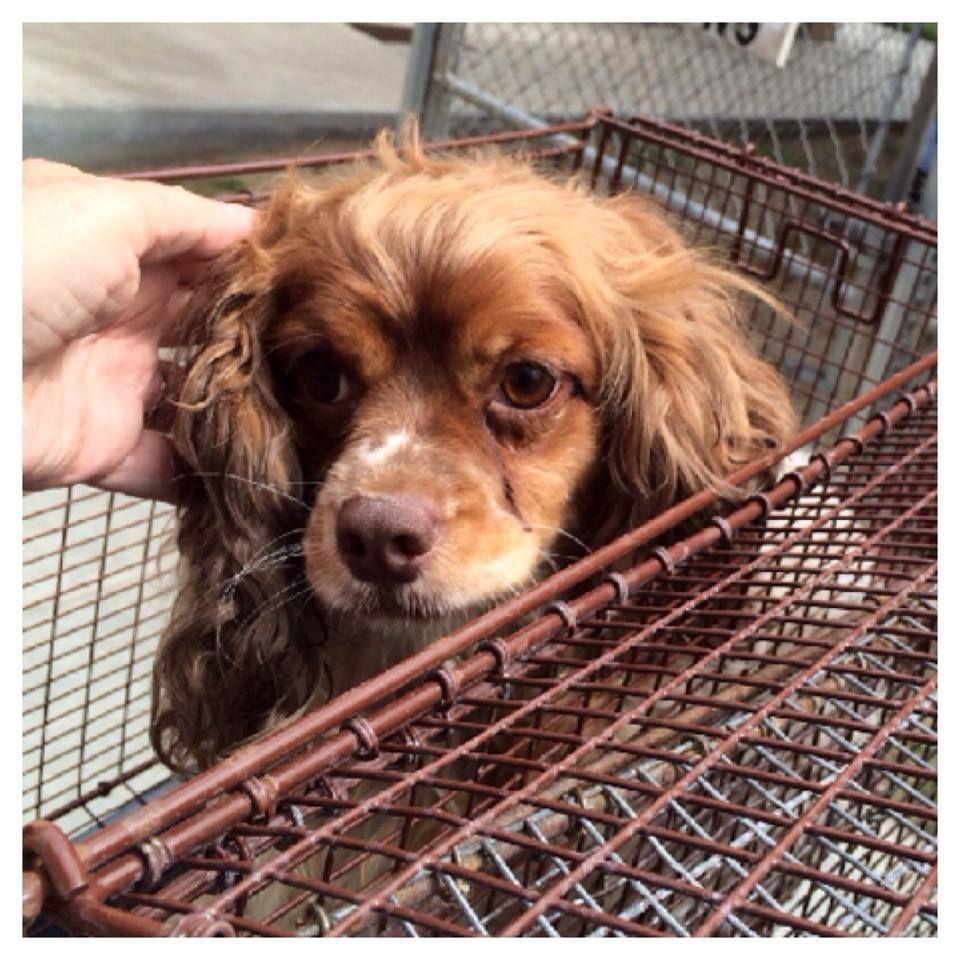 roblox adopt me pet shop release date