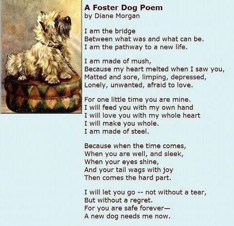 dog that died poem found this poem and it put everything into the proper perspective