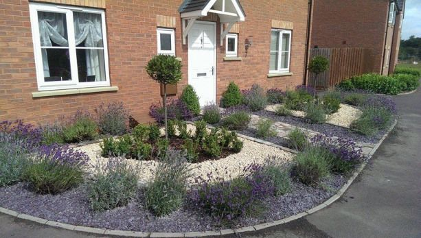 Lavenders and slate for formal small front garden with bay ...