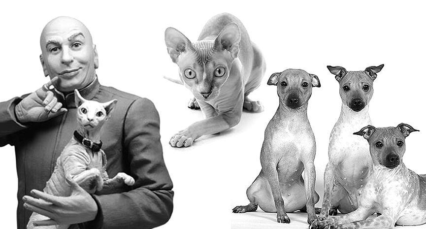 BALD Is Beautiful Love pet, Pet magazine, Pets