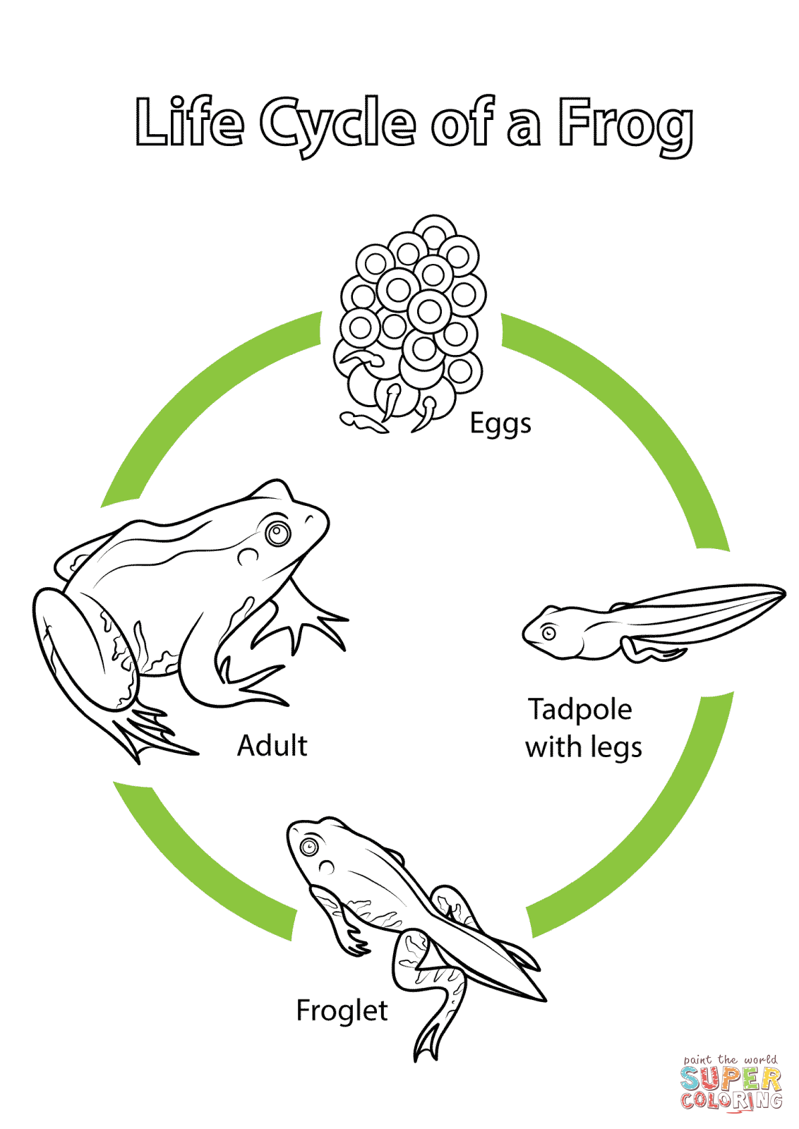 Life Cycle Of A Frog Coloring Page From Biology Category