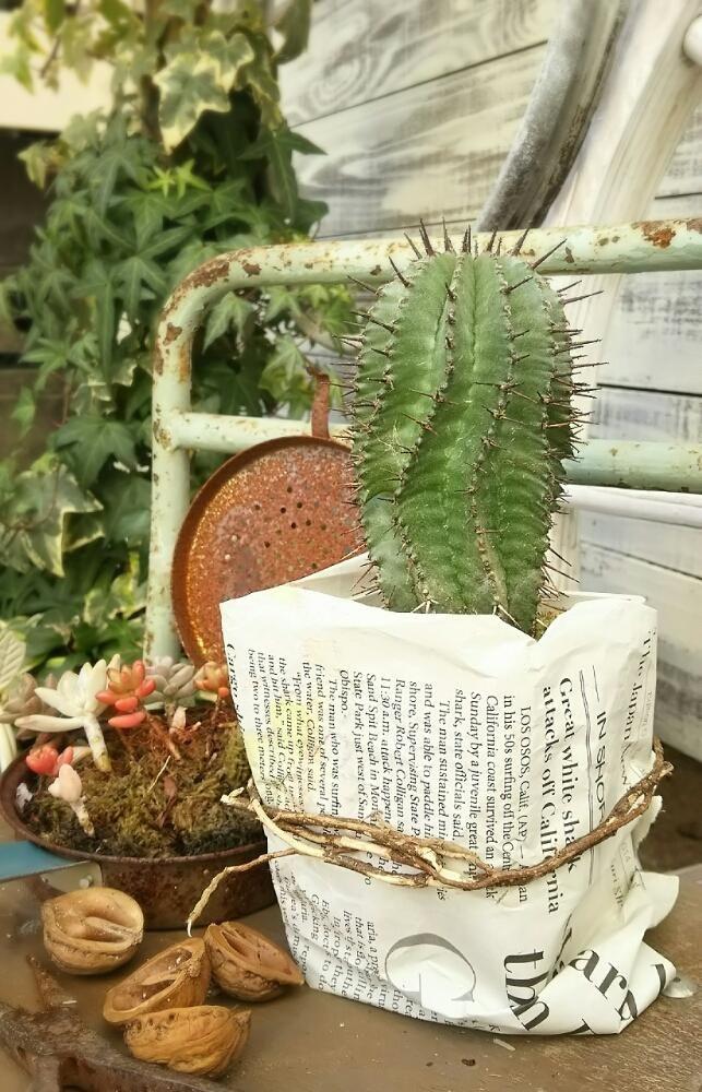myさんが投稿した画像です。他のmyさんの画像も見てませんか? おすすめの観葉植物や花の名前、ガーデニング雑貨が見つかる!GreenSnap(グリーンスナップ)