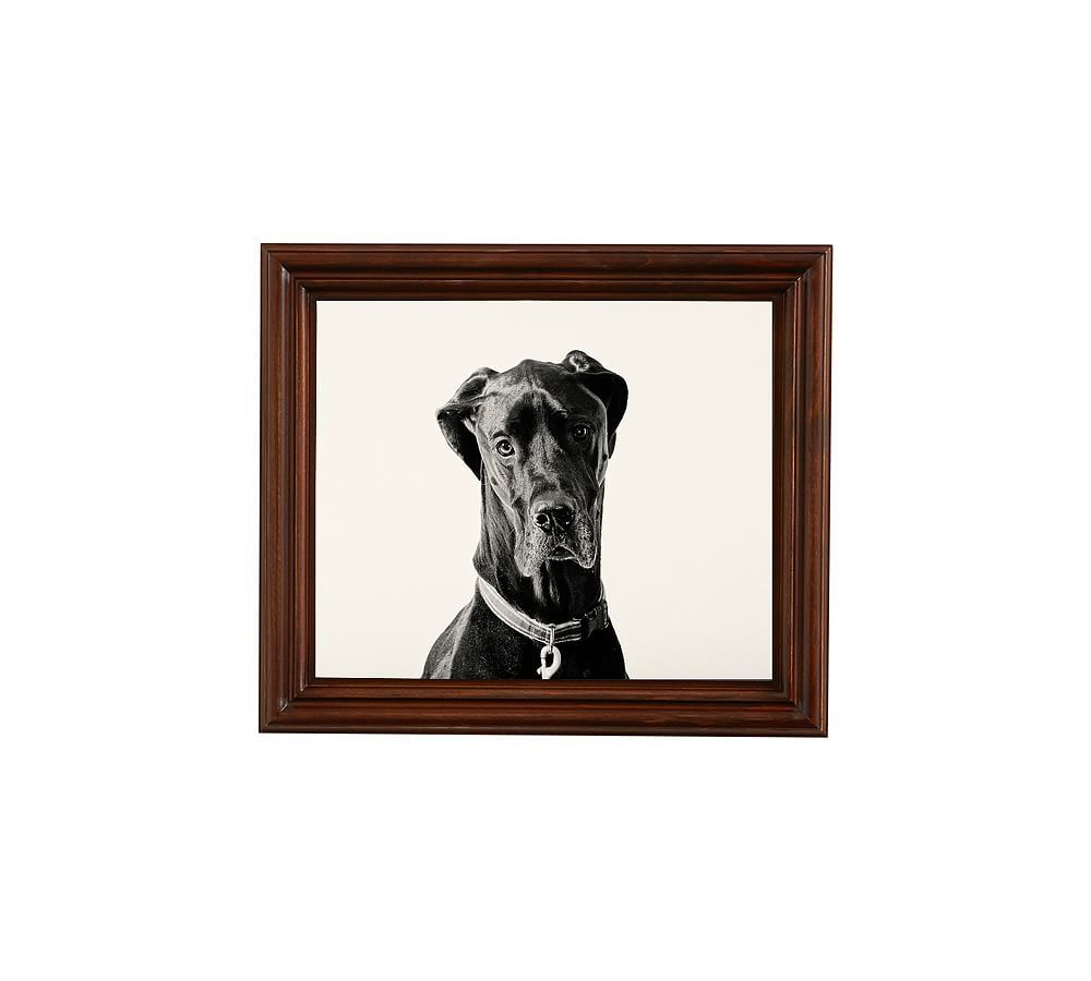 Great Dane By Jennifer Meyers Great Dane Puppy Great Dane Funny
